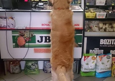 sklep zoologiczny ZooNemo Legionowo Nowy Dwór Mazoiwecki terrarystyka, akwarystyka, psy, koty, wyposażenie , pokarm (21)