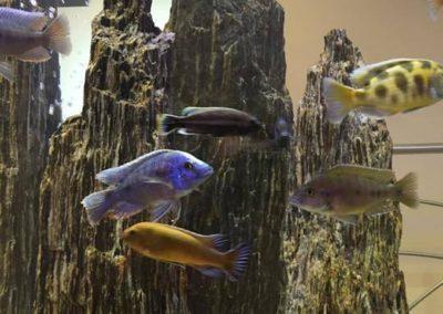 sklep zoologiczny ZooNemo Legionowo Nowy Dwór Mazoiwecki terrarystyka, akwarystyka, psy, koty, wyposażenie , pokarm (3)