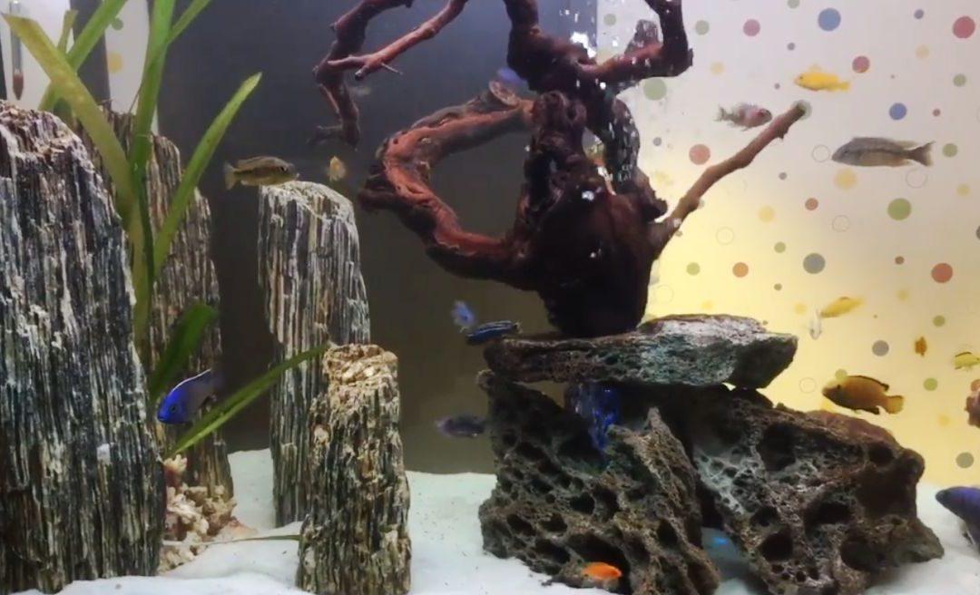 Efekt końcowy, czyli jak wygląda zakończenie projektu akwarium 500 L ?!
