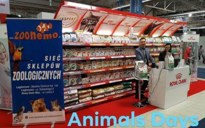 Animals Days i ZooNemo