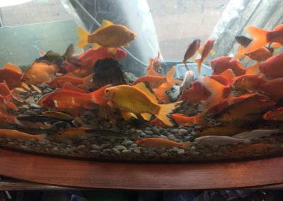 Oczka wodne ryby rośliny Legionowo Nowy Dwór Mazowiecki (2)
