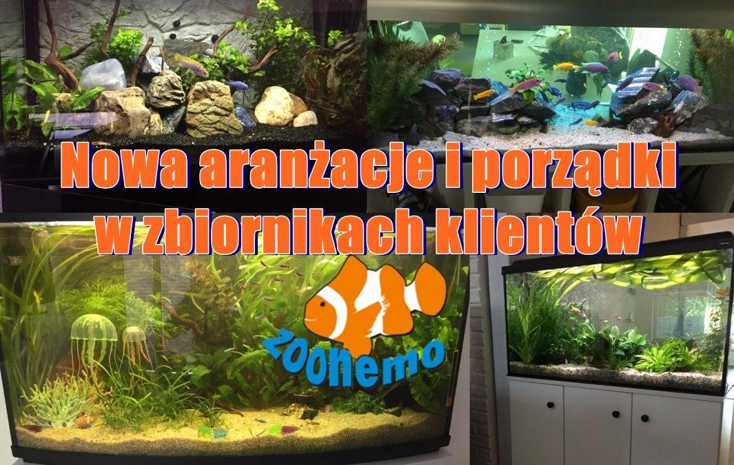Nowa aranżacje i porządki w zbiornikach klientów ZooNemo