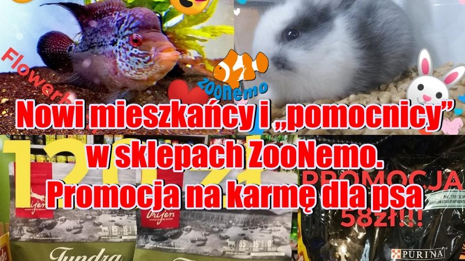"""Nowi mieszkańcy i """"pomocnicy"""" w sklepach ZooNemo  Promocja na karmę dla psa lub kota"""
