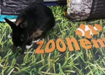 królik miniaturka sklep ZooNemo Legionowo Nowy Dwór Mazowiecki (1)