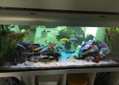 zbiorniki wodne akwaria Legionowo Nowy Dwór Mazowiecki (1)