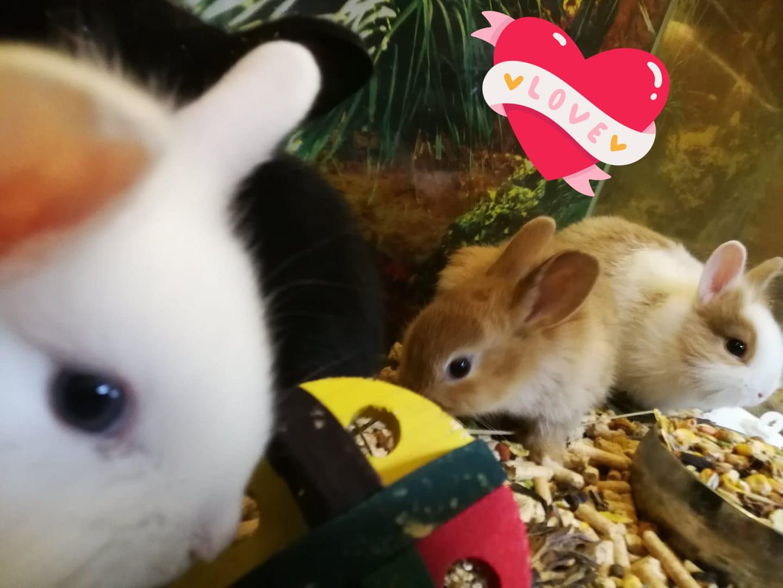 króliczki miniaturki ZooNemo Legionowo, Nowy Dwór Mazowiecki