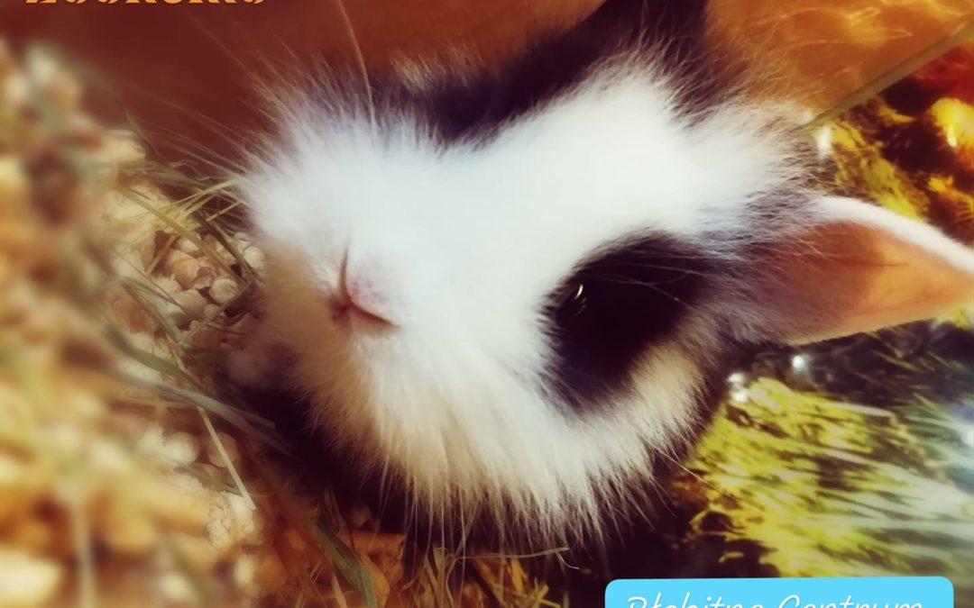 preparaty, pokarm do oczka wodnego, rabaty, pokarm dla psa i kota króliki miniaturki zoonemo (2)