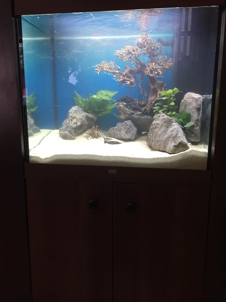 zakładanie akwarium Legionowo, Nowy Dwór Mazowiecki ZooNemo
