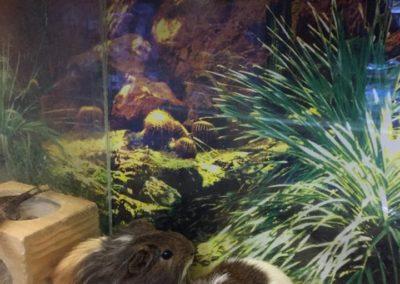 Zwięrzęta sklepy zoologiczne ZooNemo Błękitnym Centrum Legionowo