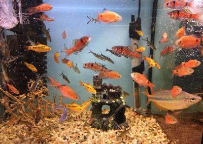 Zwięrzęta sklepy zoologiczne ZooNemo Błękitnym Centrum Legionowo (12)