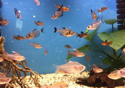 Zwięrzęta sklepy zoologiczne ZooNemo Błękitnym Centrum Legionowo (5)