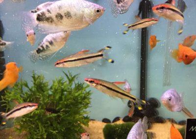 Zwięrzęta sklepy zoologiczne ZooNemo Błękitnym Centrum Legionowo (7)
