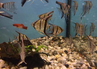 Zwięrzęta sklepy zoologiczne ZooNemo Błękitnym Centrum Legionowo (8)
