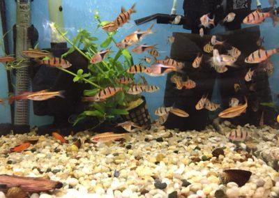 Zwierzęta sklepy zoologiczne Zoonemo Nowy Dwór Mazowiecki