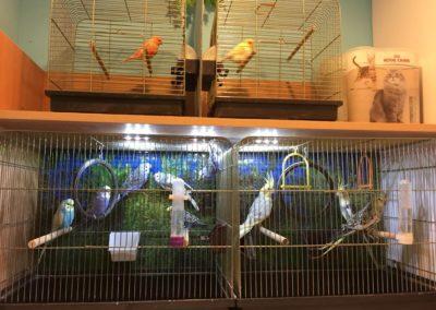 Zwierzęta sklepy zoologiczne Zoonemo Nowy Dwór Mazowiecki (5)