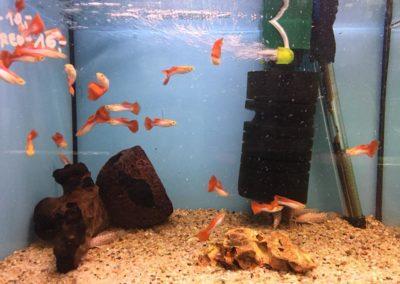 Zwierzęta w sklepach zoologicznych Legionowo, Nowy Dwór Mazowiecki (12)