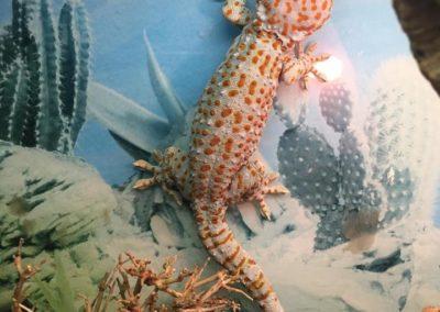 Zwierzęta w sklepach zoologicznych Legionowo, Nowy Dwór Mazowiecki (5)