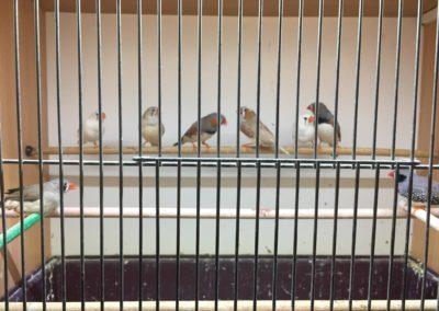 Zwierzęta w sklepach zoologicznych Legionowo, Nowy Dwór Mazowiecki (7)