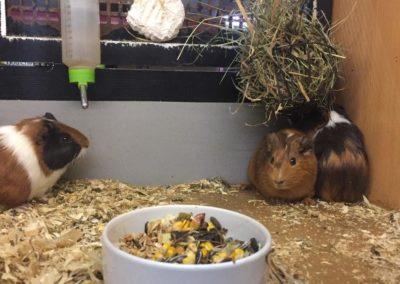 Zwierzęta w sklepach zoologicznych Legionowo, Nowy Dwór Mazowiecki