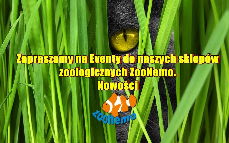 Zapraszamy na Eventy do naszych sklepów zoologicznych  ZooNemo. Nowości
