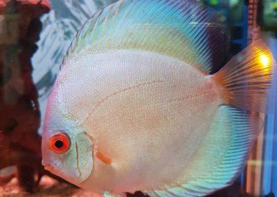 Ryby Akwariowe w sklepach ZooNemo Legionowo Nowy Dwór Mazowiecki (1)