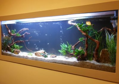 Urządzanie zbiorników wodnych akwaria na zamówienie ZooNemo 2 (1)