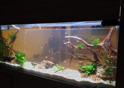 Urządzanie zbiorników wodnych akwaria na zamówienie ZooNemo 2 (2)