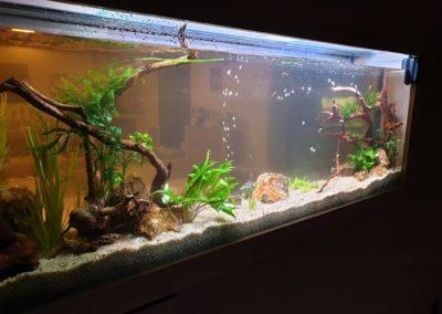 Urządzanie zbiorników wodnych akwaria na zamówienie ZooNemo 2 (3)