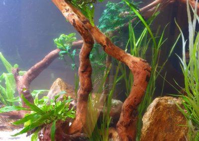 Urządzanie zbiorników wodnych akwaria na zamówienie ZooNemo 2 (5)
