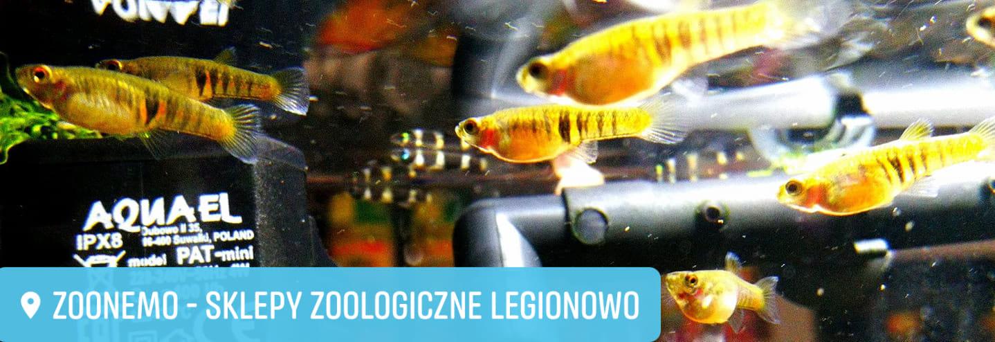 Drobnotka Nadobna ryby akwariowe Legionowo Nowy Dwór Mazowiecki