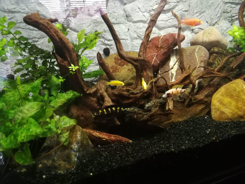 Obsługa i serwis akwariów Legionowo Nowy Dwór Mazowiecki ZooNemo