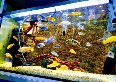 Odwiedziny małych akwarystów w sklepie zoologicznym ZooNemo Legionowo Błękitne Centrum (3)