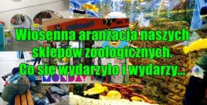 Wiosenna aranżacja naszych sklepów zoologicznych. Co się wydarzyło i wydarzy…
