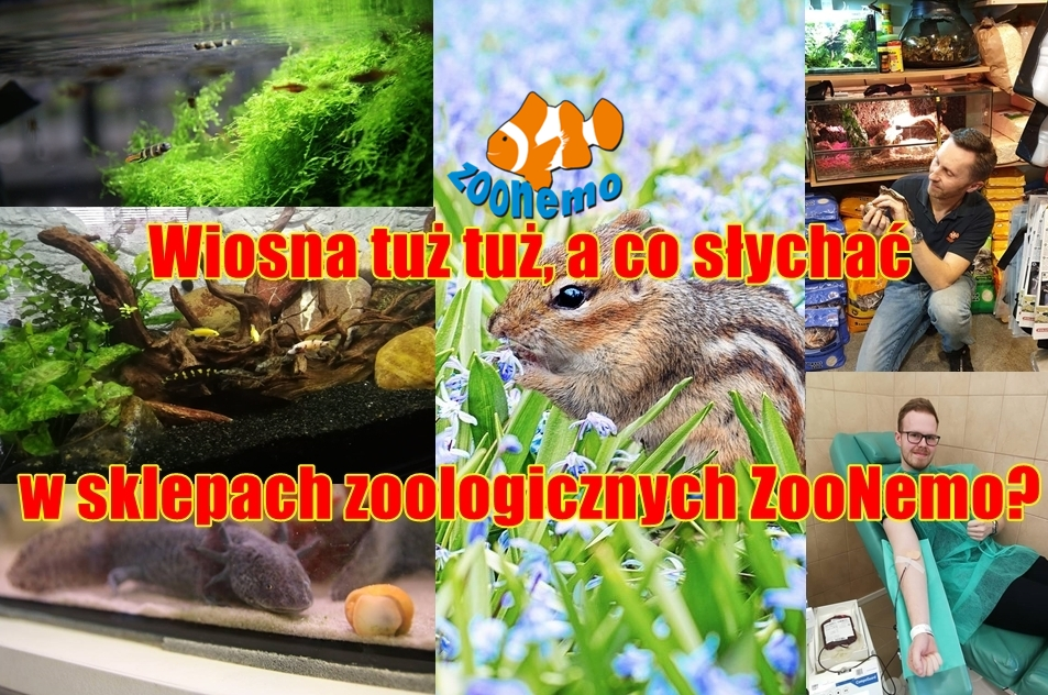 Wiosna tuż tuż, a co słychać w sklepach zoologicznych ZooNemo