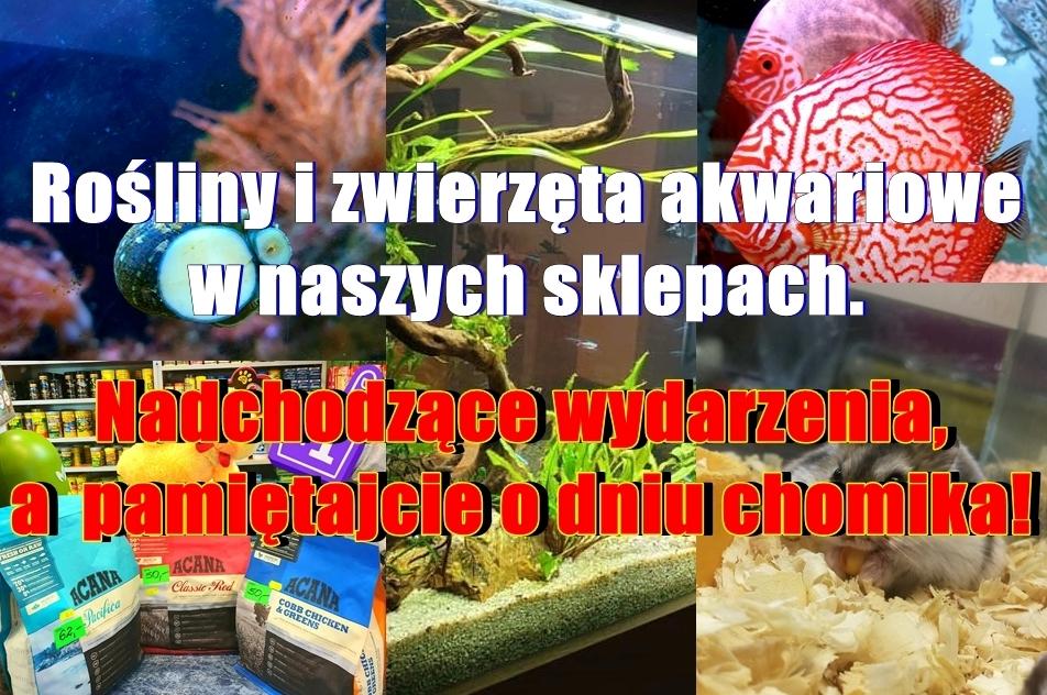 Rośliny i zwierzęta akwariowe w naszych sklepach. Nadchodzące wydarzenia, a pamiętajcie o dniu chomika!