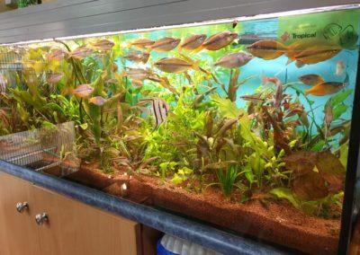 akwaria ryby i rośliny akwariowe Legionowo Nowy Dwór Mazowiecki 2