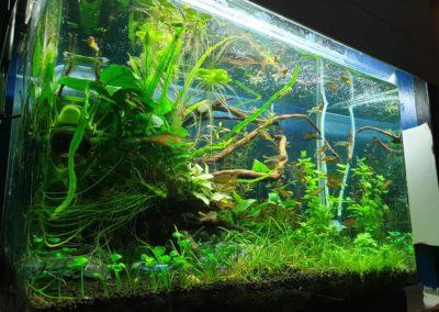 akwaria ryby i rośliny akwariowe Legionowo Nowy Dwór Mazowiecki