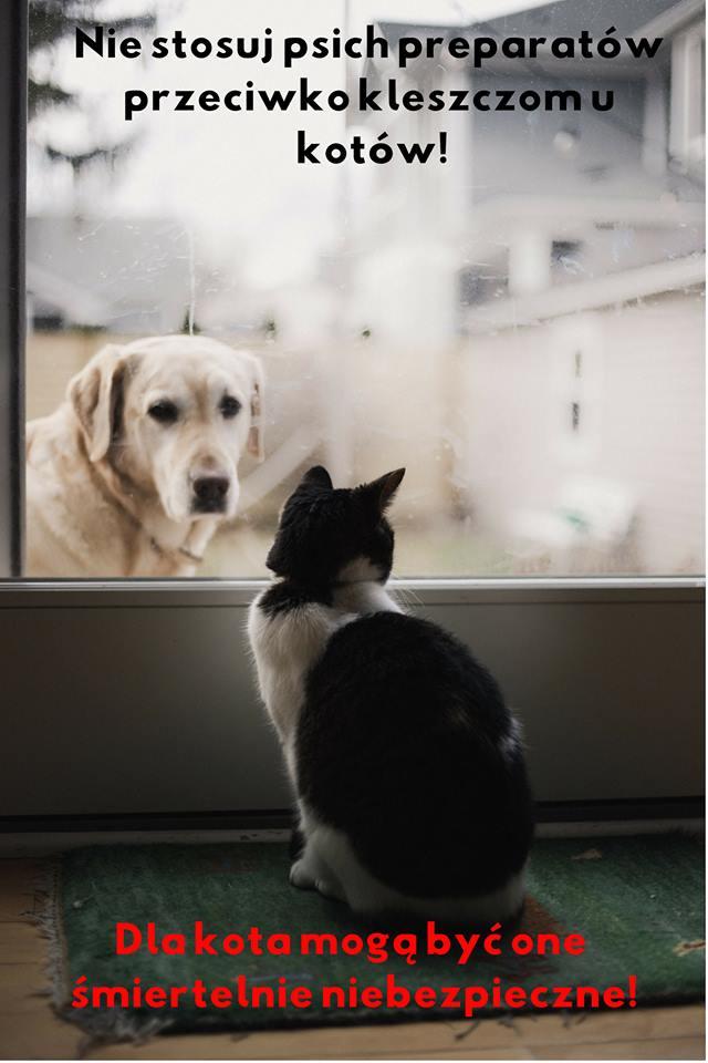 preparaty na kleszcze dla psów nie dla kotów Legionowo Nowy Dwór Mazowiecki