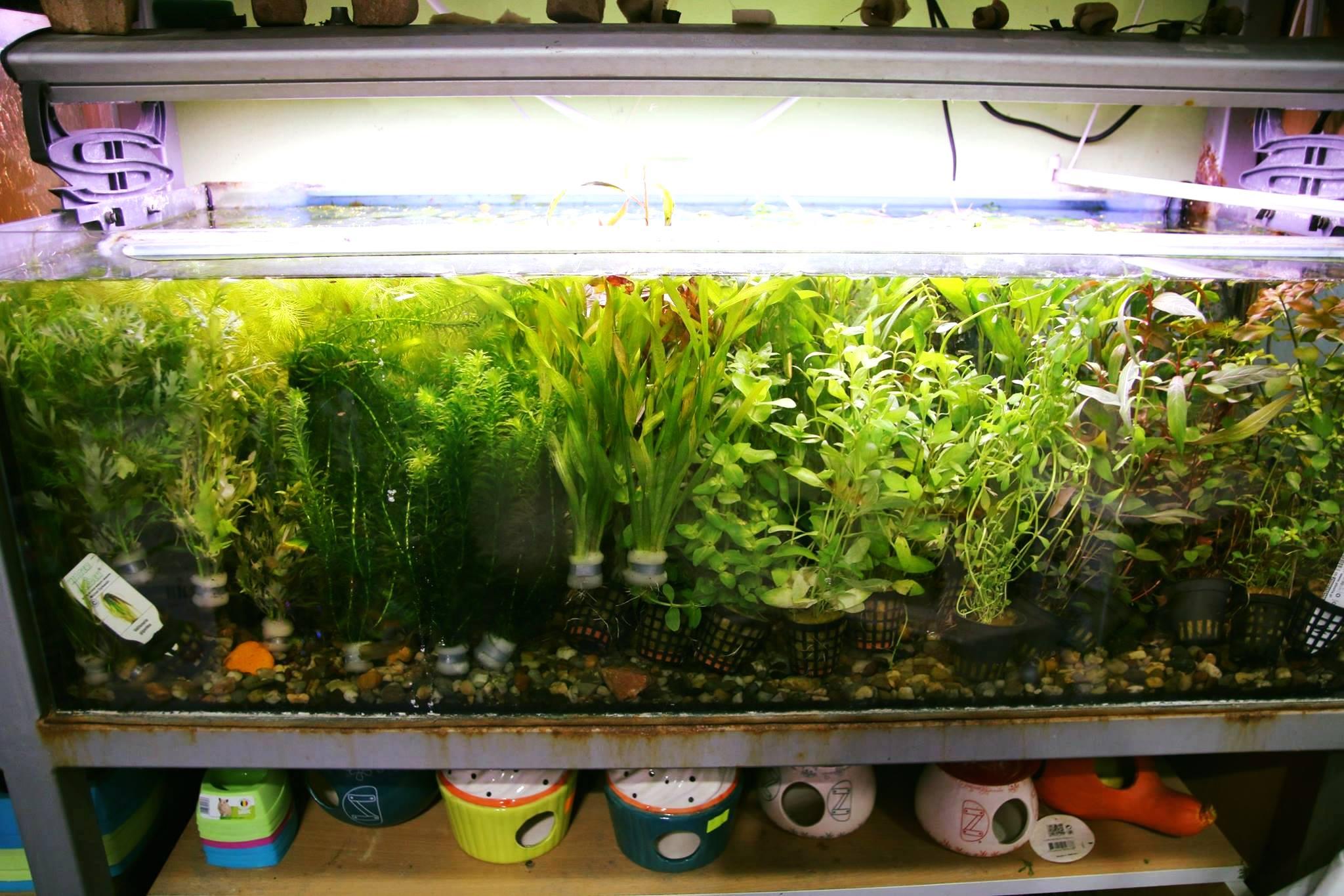 rośliny akwariowe Legionowo Nowy Dwór Mazowiecki