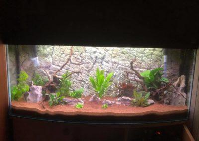 urządzanie akwarium sklepy zoologiczne ZooNemo Legionowo Nowy Dwór Mazowiecki 2