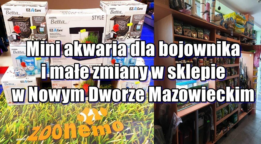 Mini akwaria dla bojownika i małe zmiany w sklepie w Nowym Dworze Mazowieckim