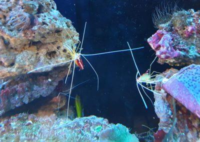 Zwierzęta i ryby morskie Legionowo Nowy Dwór Mazowiecki akwarystyka morska ZooNemo (1)