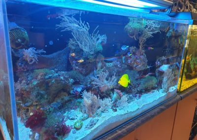 Zwierzęta i ryby morskie Legionowo Nowy Dwór Mazowiecki akwarystyka morska ZooNemo (2)