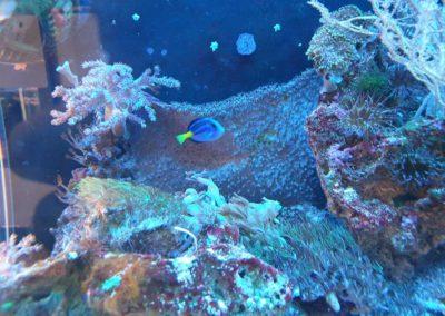 Zwierzęta i ryby morskie Legionowo Nowy Dwór Mazowiecki akwarystyka morska ZooNemo (3)