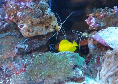 Zwierzęta i ryby morskie Legionowo Nowy Dwór Mazowiecki akwarystyka morska ZooNemo (4)