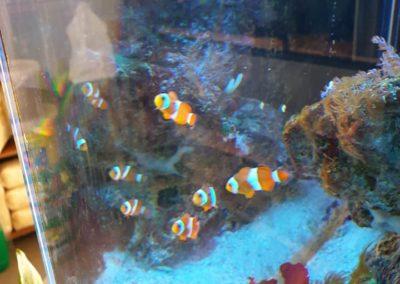Zwierzęta i ryby morskie Legionowo Nowy Dwór Mazowiecki akwarystyka morska ZooNemo (5)