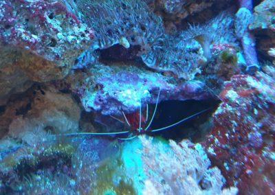 Zwierzęta i ryby morskie Legionowo Nowy Dwór Mazowiecki akwarystyka morska ZooNemo (6)