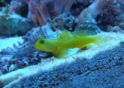 Zwierzęta i ryby morskie Legionowo Nowy Dwór Mazowiecki akwarystyka morska ZooNemo (7)