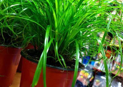 papirus Legionowo Nowy Dwór Mazowiecki sklepy zoologiczne ZooNemo