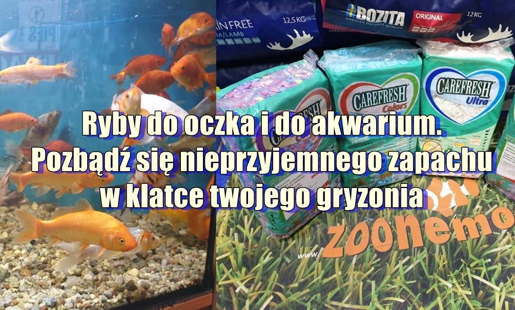 Ryby do oczka i do akwarium. Pozbądź się nieprzyjemnego zapachu w klatce twojego gryzonia